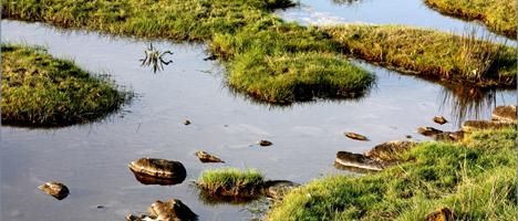 Salzwiesen sind wertvolle Ökosysteme