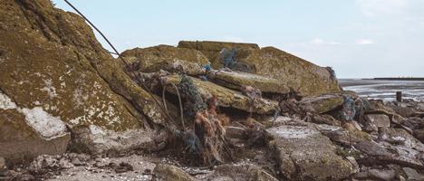 Plastikmüll gefährdet Meeretiere und Vögel