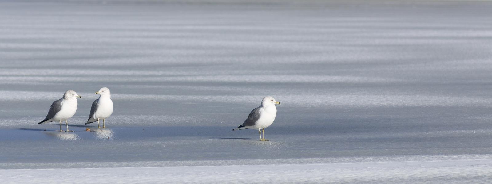 Winter an der Nordsee