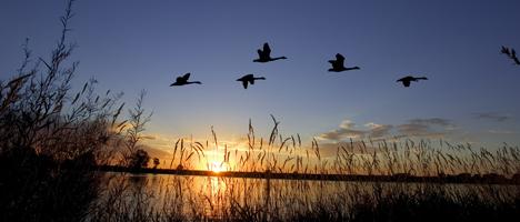 Buch über Zugvögel